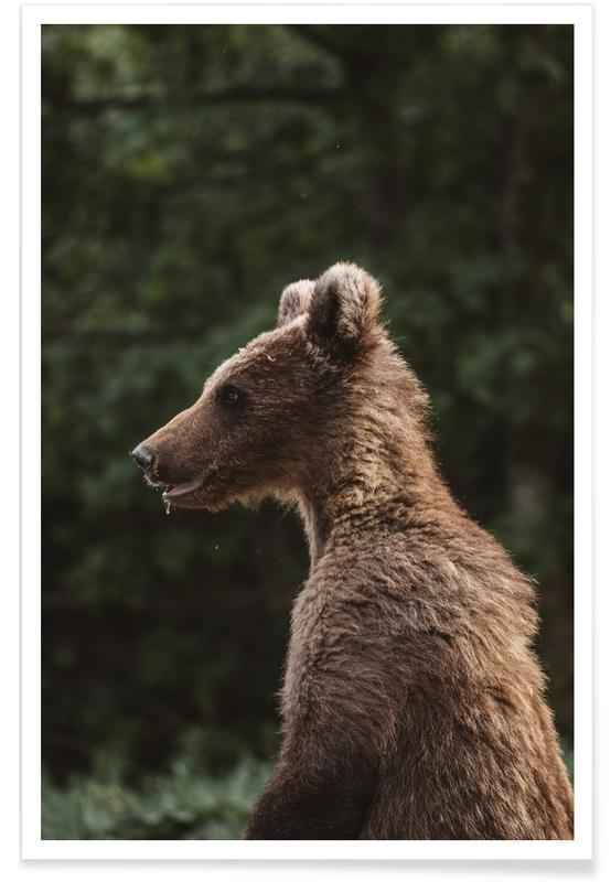 Bears, Smiling Bear by @szabo_ervin_edward Poster
