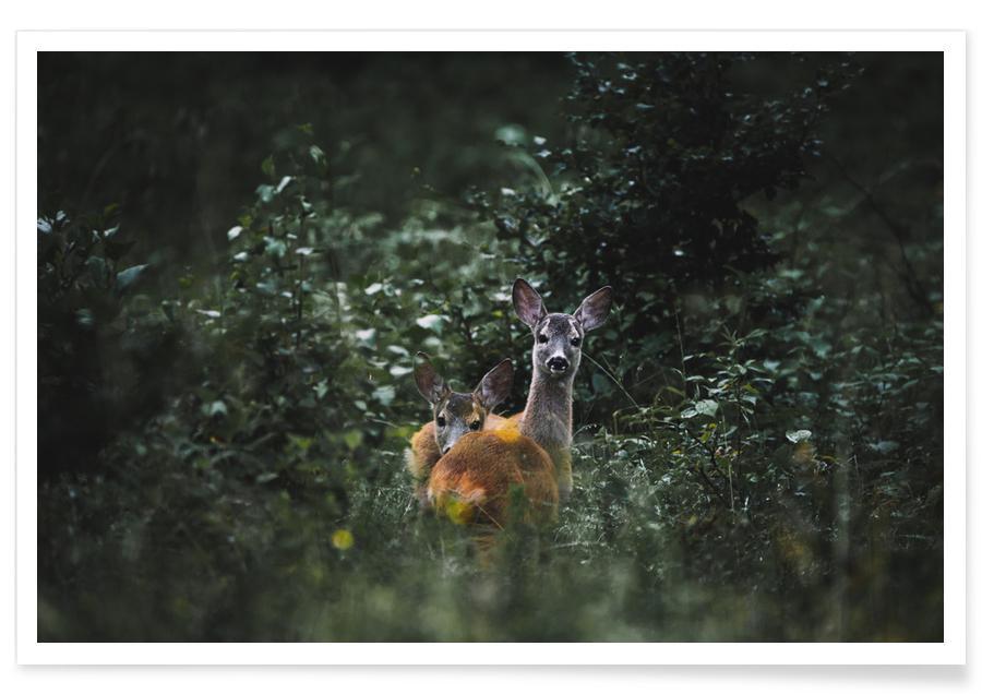 Forests, Deer, Friend Or Foe? by @szabo_ervin_edward Poster