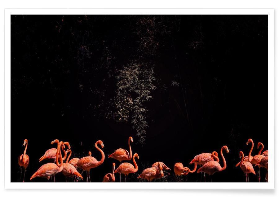 Safari dyr, Squad by @abaseenafghan Plakat