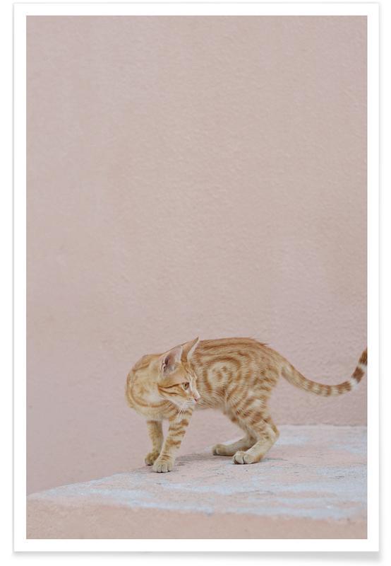 Katten, Tiger poster
