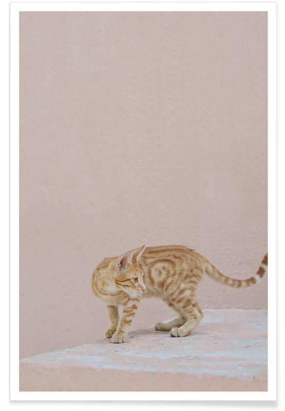 Chats, Tiger affiche