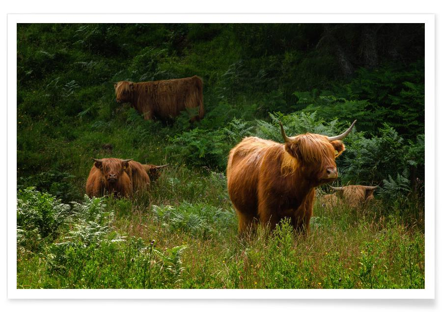Cows, Wild Gang Poster