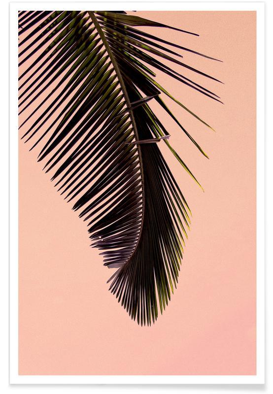 Palms, Pink Palm Poster