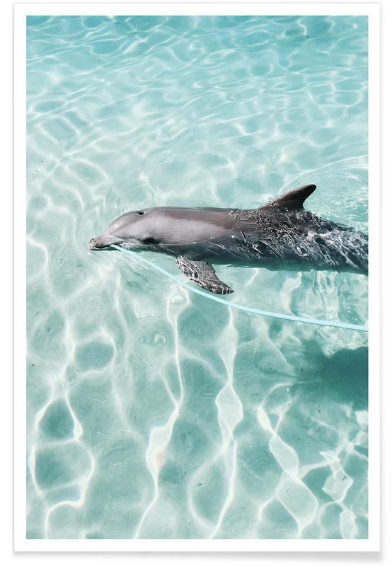Dauphins, Dolphin, Gold Coast affiche
