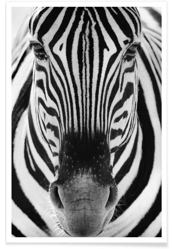 Zèbres, Noir & blanc, Zebra, Etosha National Park affiche