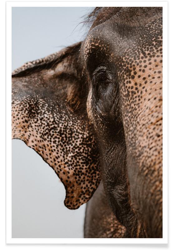 Olifanten, Elephant, Nepal poster