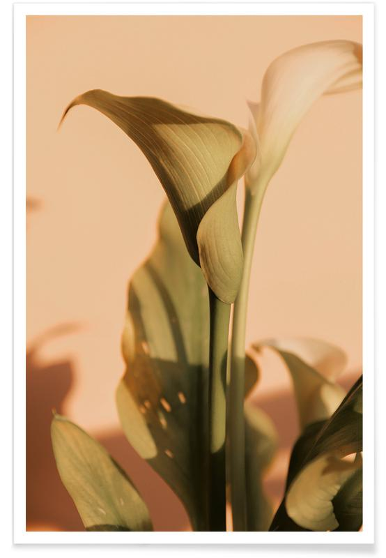 , Lily in Soft Light -Poster