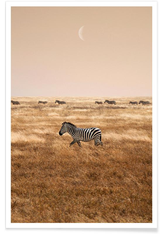 Woestijn, Zebra's, Zebras at Dusk poster