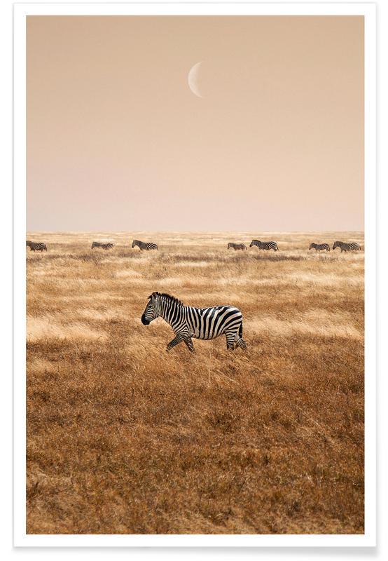 Deserts, Zebras, Zebras at Dusk Poster