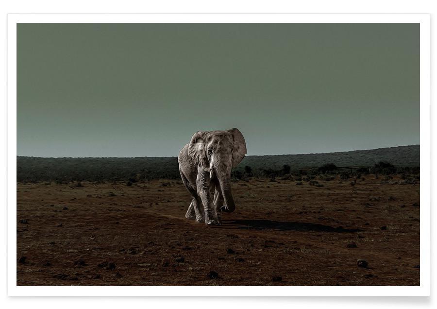 Elefanten, An Evening Ramble -Poster