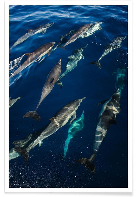 Oceanen, zeeën en meren, Honden, The Pod poster