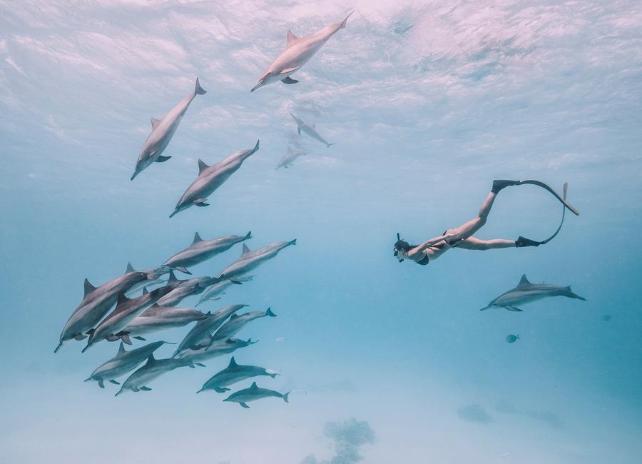 Mermaids by @JimmySong1 -Leinwandbild