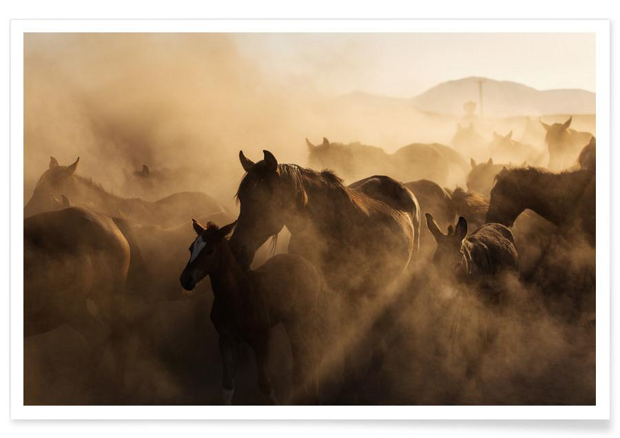 Horses, The Ranch Poster