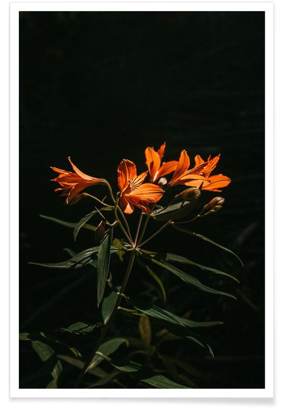 , Inflorescence Poster