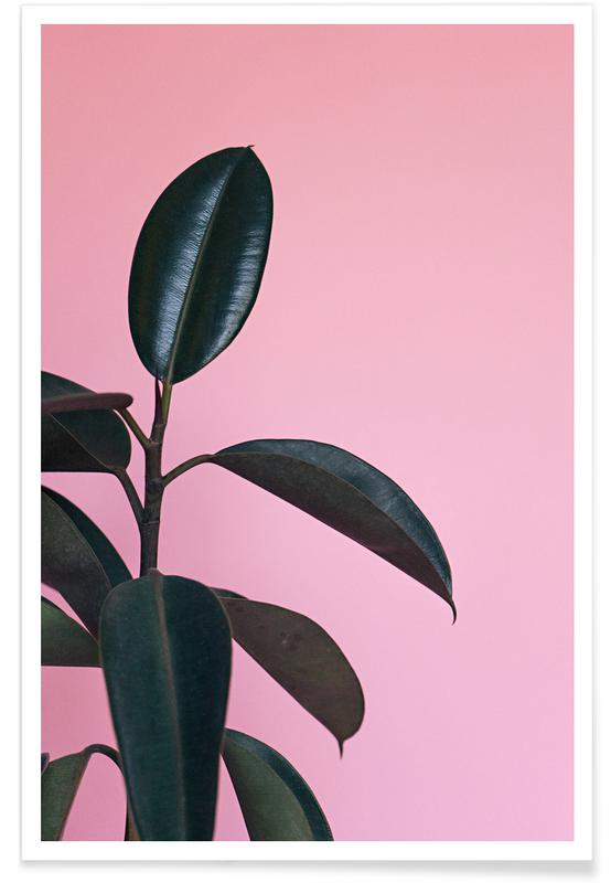 Ficus on Pink by @scottywebb affiche