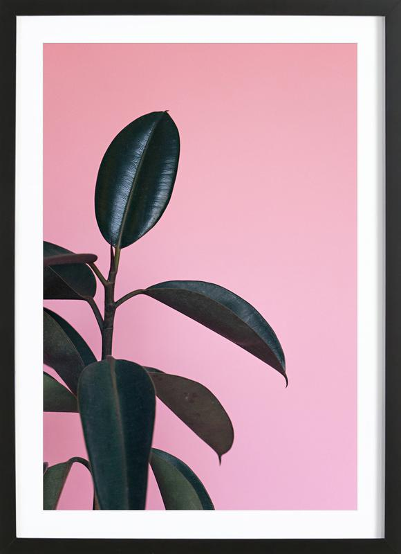 Ficus on Pink by @scottywebb Poster i träram