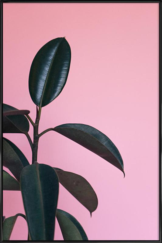 Ficus on Pink by @scottywebb Poster i standardram