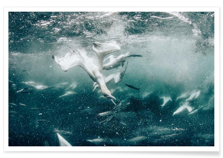 Hav, sø & havlandskab, Battle by @JimmySong1 Plakat