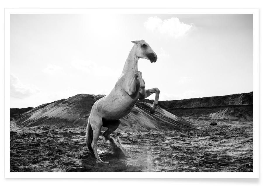 Sort & hvidt, Heste, Majestic Stallion by @Werema Plakat