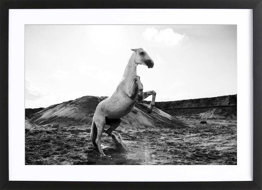Majestic Stallion by @Werema Poster i träram