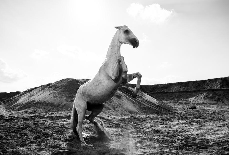 Majestic Stallion by @Werema Aluminium Print