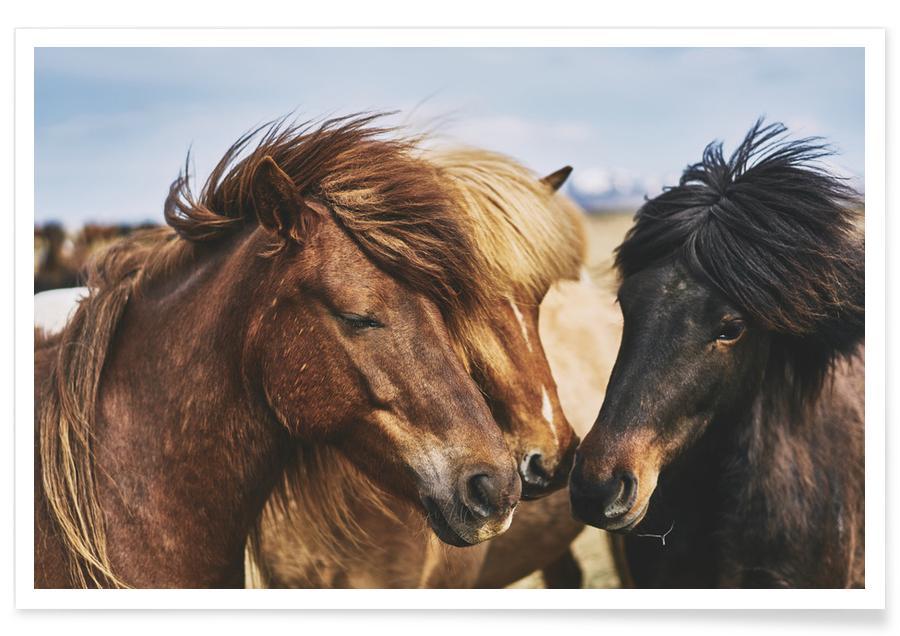 Heste, Three Musketeers 1 by @dorukyemenici Plakat