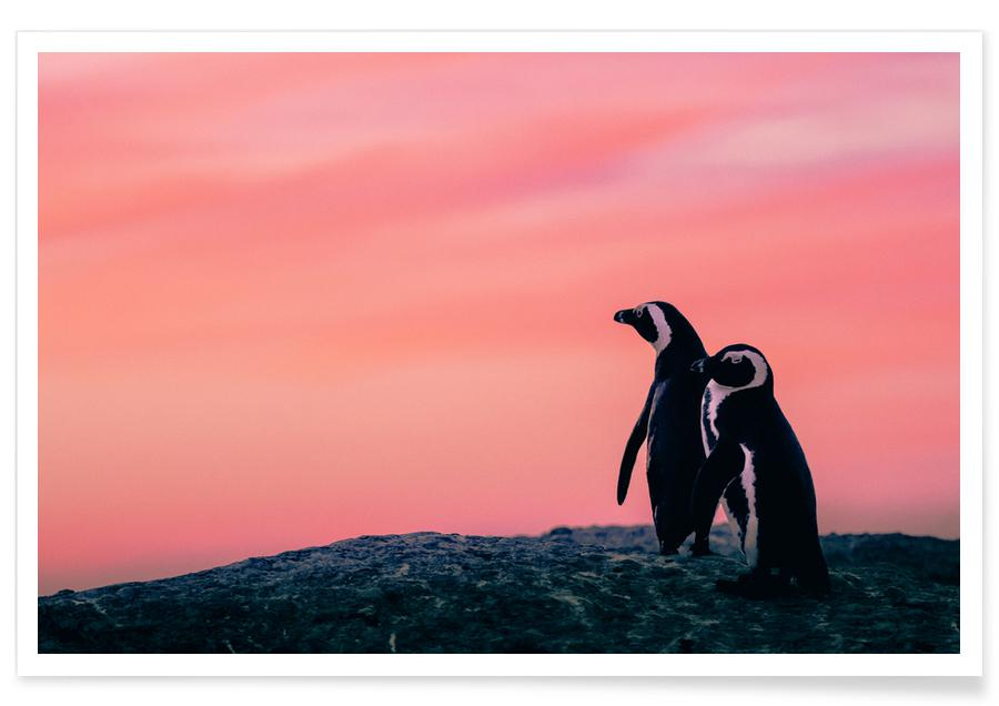 Pinguiner, Solnedgange, Tickled Pink by @JimmySong1 Plakat