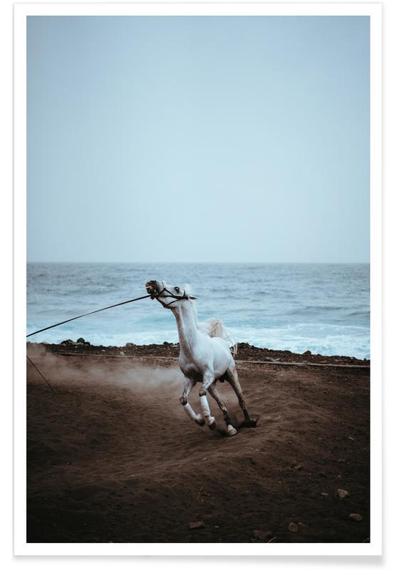 Heste, Whinnying by @miniloc Plakat