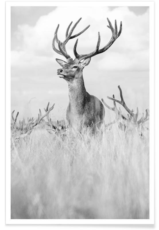 Hjorte, Sort & hvidt, Stag Pride by Monika S. Jakubowska Plakat
