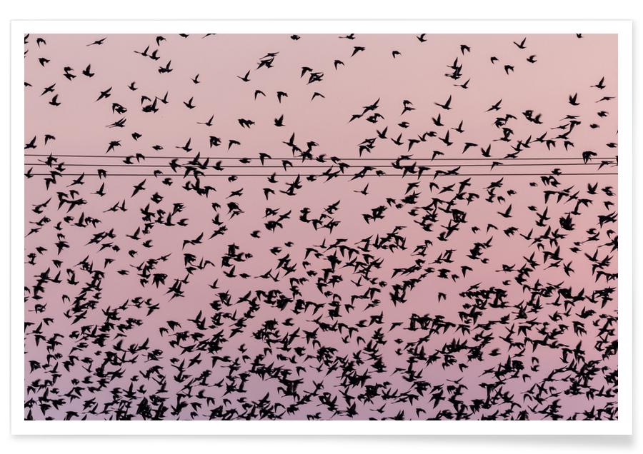 Himmel & skyer, Chaos in Bird Migration by @matthcon01 Plakat