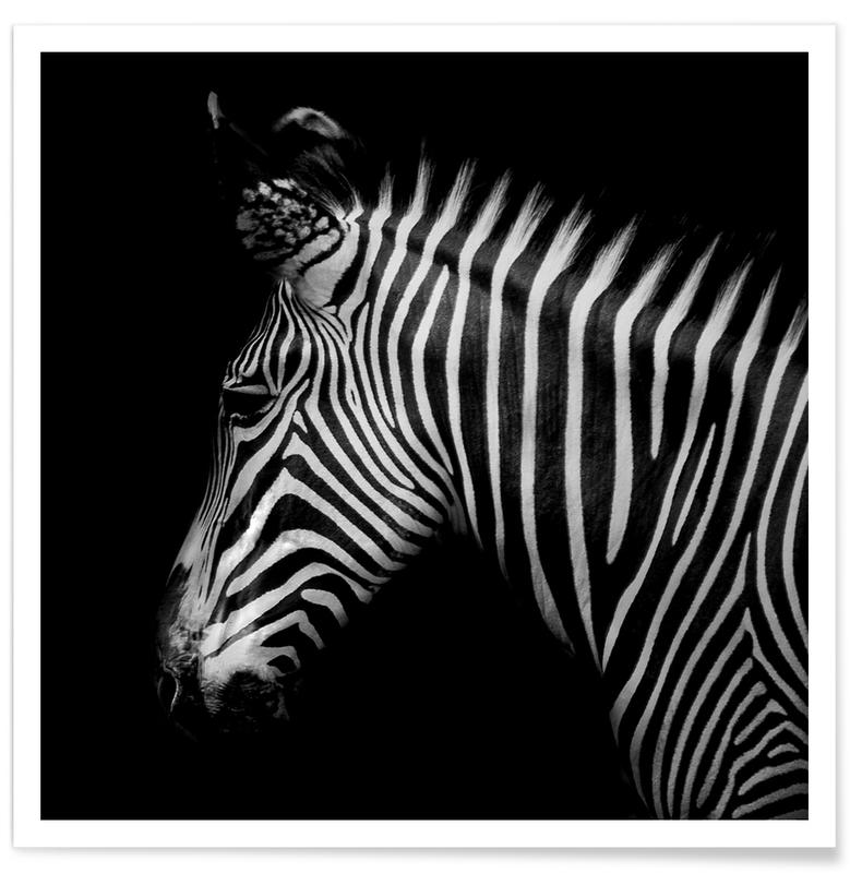 Sort & hvidt, Safari dyr, Zebra Profile by Lothare Dambreville Plakat