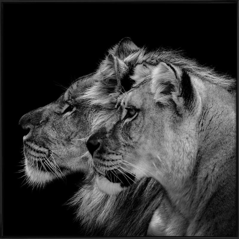 Lion Duo Profile by Lothare Dambreville affiche encadrée