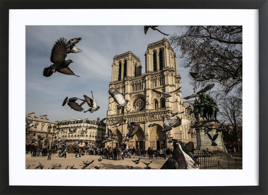The Birds of Notre Dame by Michael Kraus ingelijste print