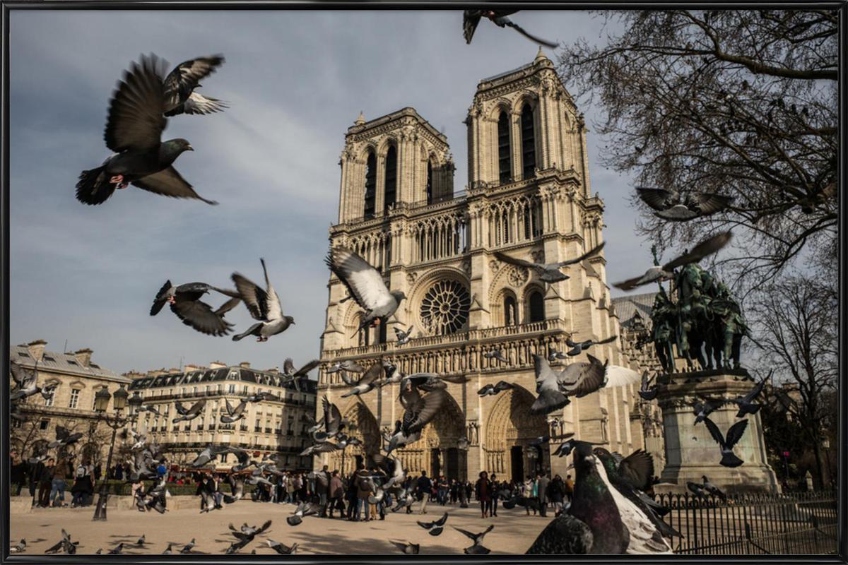 The Birds of Notre Dame by Michael Kraus Poster i standardram
