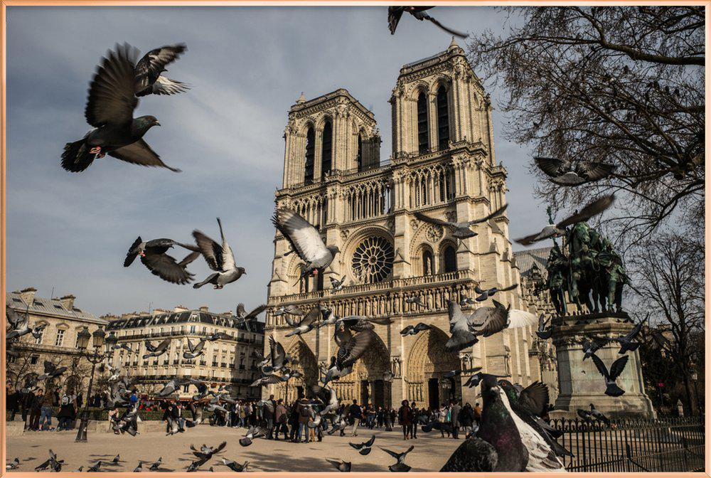 The Birds of Notre Dame by Michael Kraus -Poster im Alurahmen