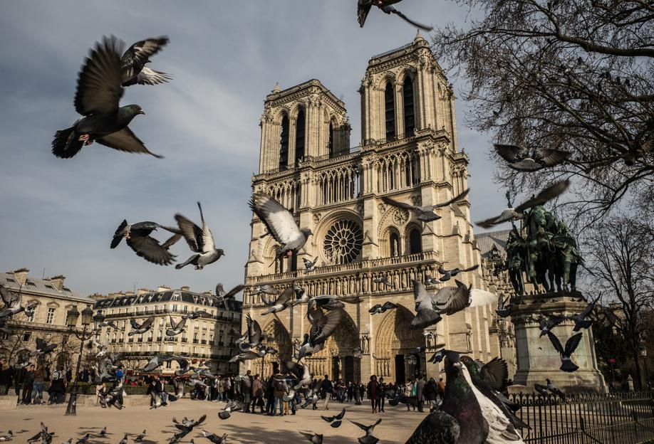The Birds of Notre Dame by Michael Kraus acrylglas print
