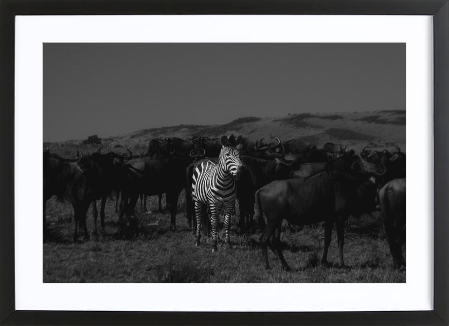 Stand out from the Crowd by Amishpatel Framed Print