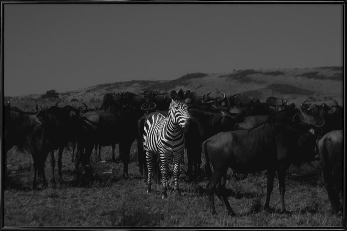 Stand out from the Crowd by Amishpatel -Bild mit Kunststoffrahmen