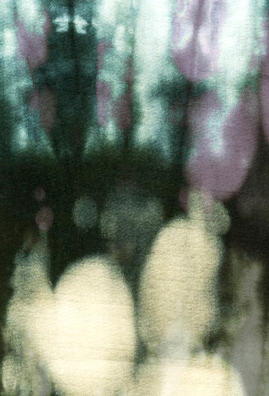 Amatsubu Acrylic Print