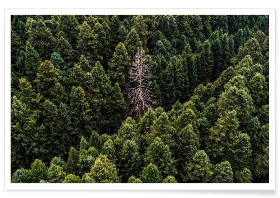 Skove, Alone Plakat