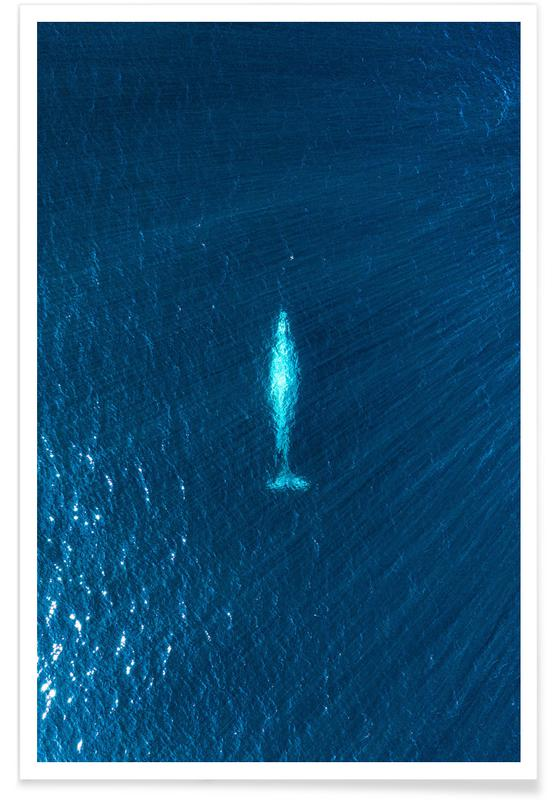 Voyages, Océans, mers & lacs, Baleines, Whale affiche