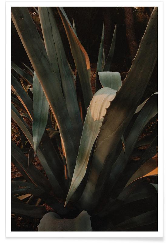 Leaves & Plants, Botanical — Aloe Vera In Croatia Poster