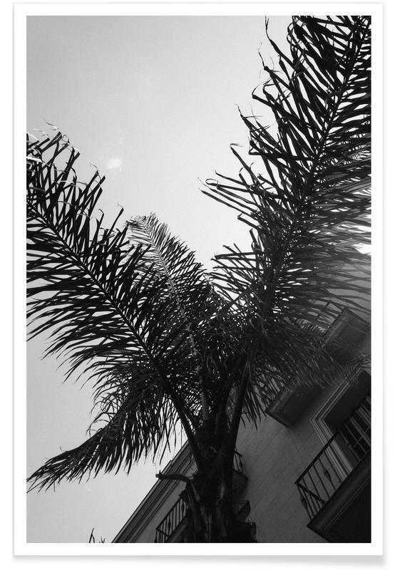 Black & White, Barcelona, Leaves & Plants, Palms, Palms — Barcelone Streets Poster