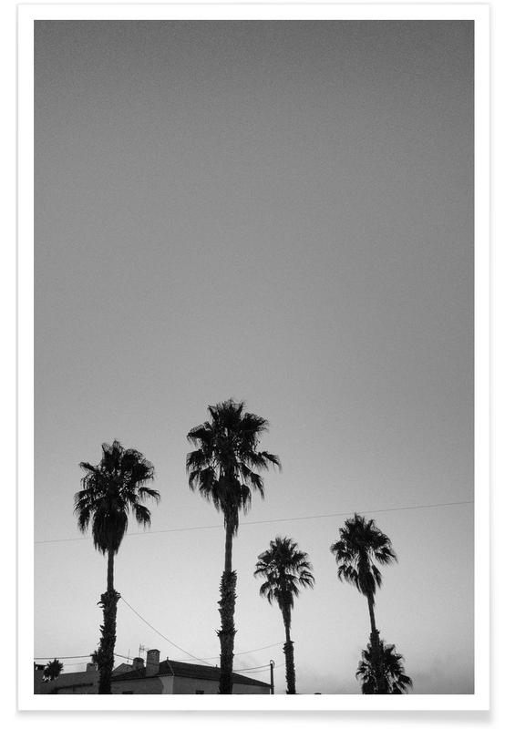 Black & White, Barcelona, Leaves & Plants, Palms, Group Of Palms Poster