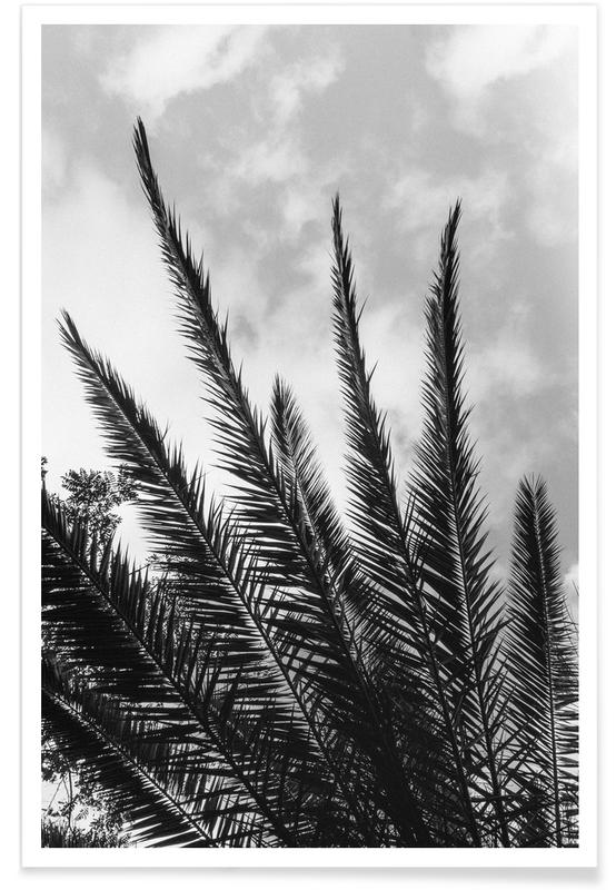 Skylines, Palmiers, Palm Skies affiche