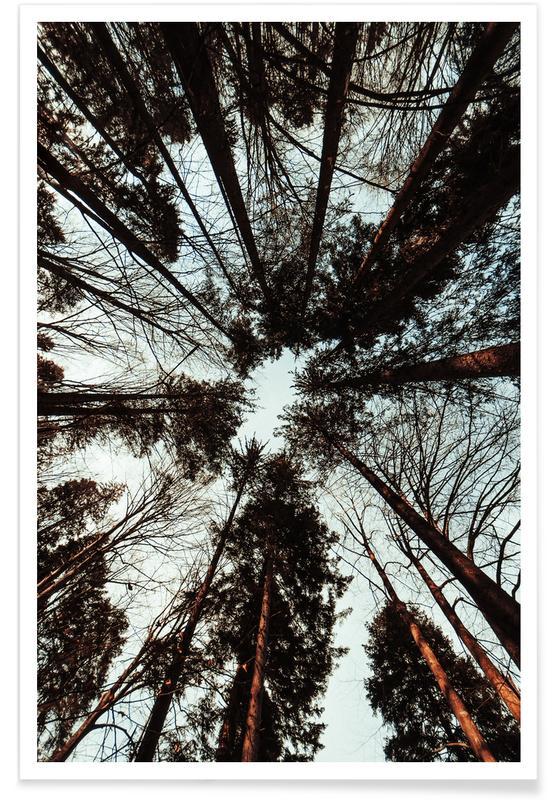 Abstrakte Landschaften, Wälder, Look Up -Poster