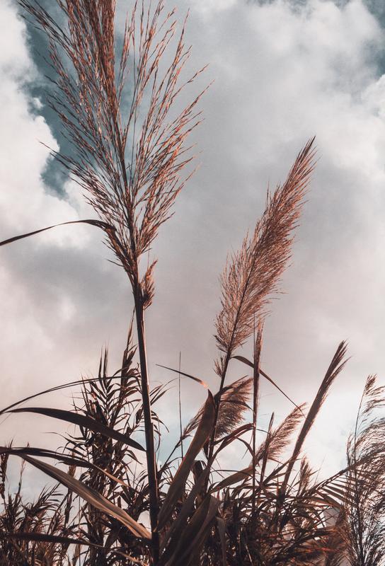Grass II -Acrylglasbild
