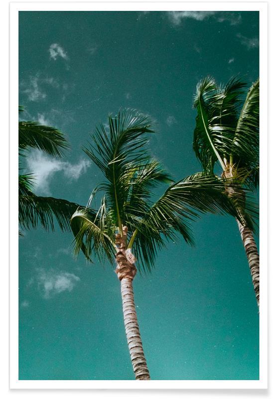 Palmiers, Tropical Palms affiche