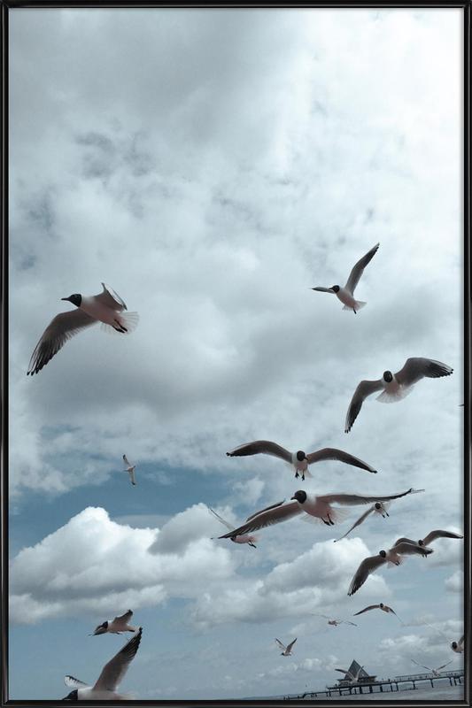 Gulls VII Framed Poster