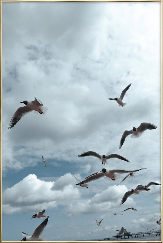 Gulls VII Poster in Aluminium Frame